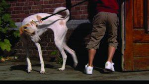 hondenenvoeten