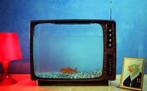 gkvkm-video-goudvis-patrick-louwerse-download